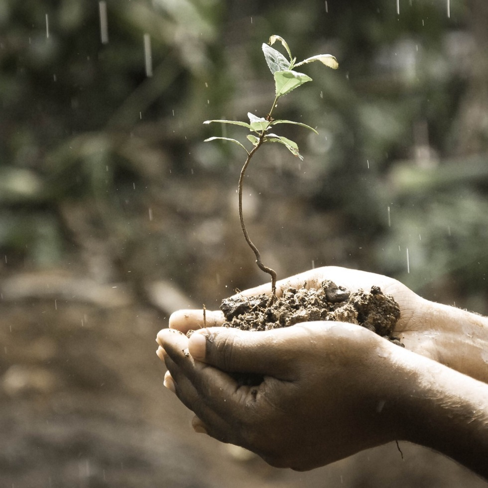 India planted 49 million trees in 1 day