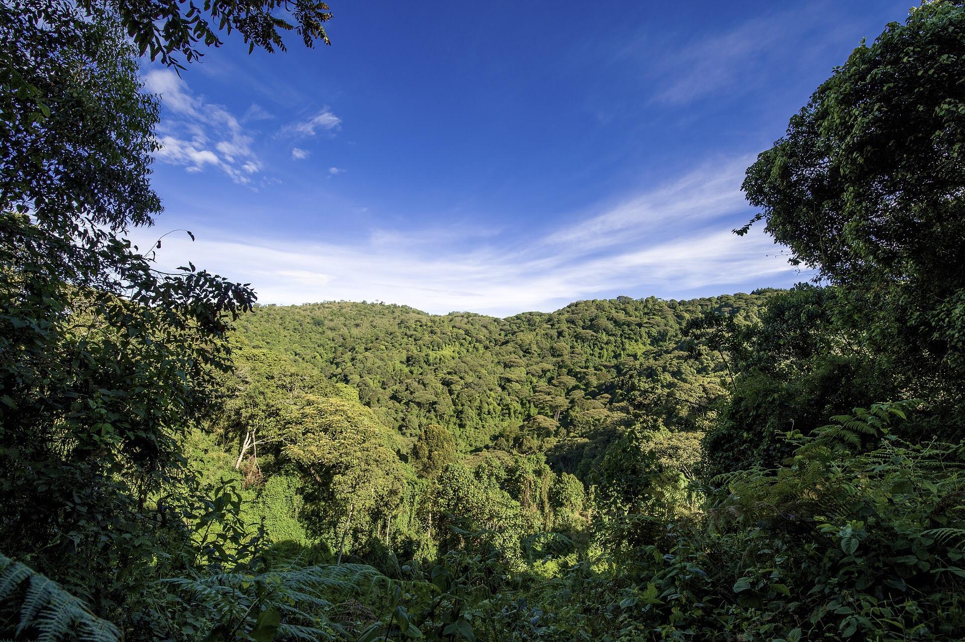 global deforestation decreased 50% since 1990